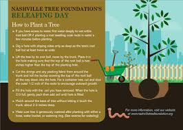 For A Tree How To Plant A Tree Nashville Tree Foundation