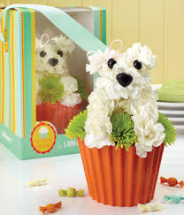 Dog Flower Arrangement 1 800 Flowers Pup Cake In Bloom At From You Flowers