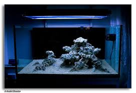 Small Tank Aquascaping The Supreme Guide To Setting Up A Saltwater Reef Aquarium