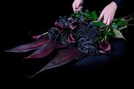 imagenes en negras rosas negras florpedia com