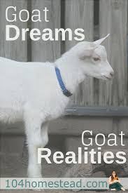 goat dreams goat realities