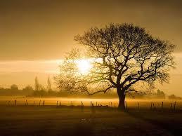 imagenes impresionantes de paisajes naturales fotografías de paisajes impresionantes imágenes taringa