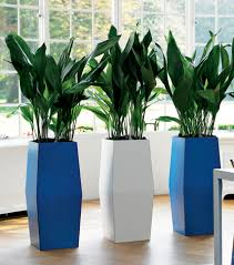 houseplants can be healthy and chic via costafarms indoor