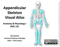 Appendicular Skeleton Worksheet Appendicular Skeleton Images Reverse Search