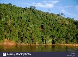 canopy amazon south america brazil amazon amazon river dense rainforest canopy