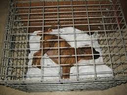 Dog Crate With Bathroom by Raising A Puppy The First Week In His New Home