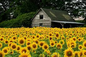 Flower Garden Ideas Beginners by Flower Gardening Ideas For Beginners Ace Gardener