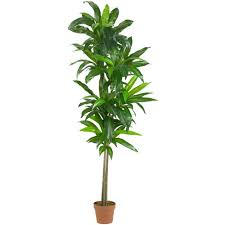 silk plants nearly real touch 6 ft dracaena silk plant 6596 the