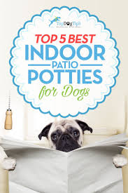 best indoor pet patio potty for dogs top 5 dog toilet solutions