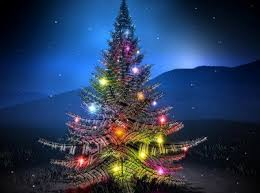 beautiful christmas trees wallpaper pictures reference