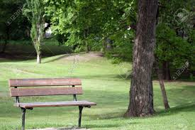 park bench under an old elm tree in spring in morden manitoba