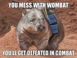Wombat Memes - you mess with the wombat you ll get defeated in combat funny