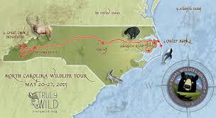 North Carolina wildlife tours images Truly wild tours bears wolves dolphins north carolina wildlife jpg