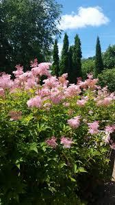 native prairie plants illinois 207 best garden favorites in sun part sun natives zone 5 images