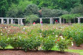 Raleigh Botanical Garden Raleigh Garden Susan Bailey Photography