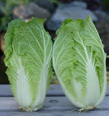 cabbage china china express cabbage seeds