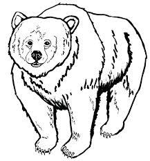 pourapp 41 polar bear pictures color printable airplanes