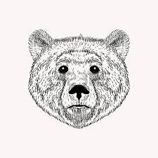 hand drawn brown bear animal vector illustration sketch isolated