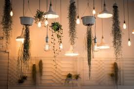 free images architecture hanging lighting plants illuminated