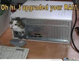 Meme Kitty - kitty meme by derpgusta meme center
