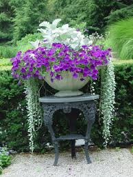 1699 best container gardening ideas images on pinterest