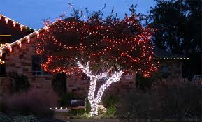 holiday tree wrapping u0026 lighting plantscape solutions of austin tx