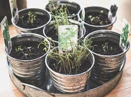 container gardening healthy indoor herbs