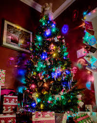 capturing your christmas tree olympus