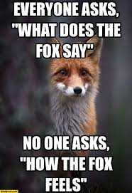 What Did The Fox Say Meme - fox memes starecat com