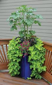 Patio Vegetables by 49 Best Herbs U0026 Veggies In Container Gardens Images On Pinterest