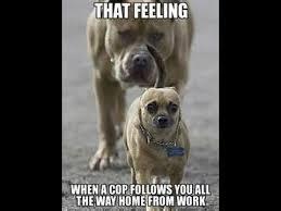 Stoned Dog Meme - funny dog meme all new winning compilation youtube