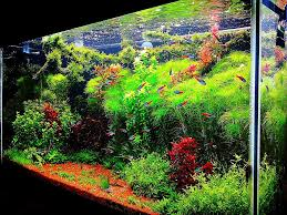 Dramatic Aquascapes Home Accessories Wonderful Aquascape Designs With Various Fish