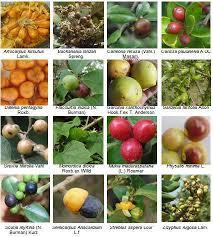 edible fruits edible fruits of hassan forest division karnataka india