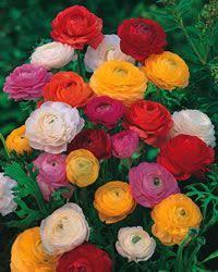 326 best flowers images on pinterest flower gardening flowers
