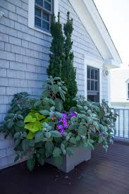 cape cod native plants 10 garden ideas to steal from provincetown on cape cod gardenista