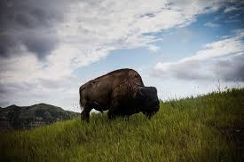 North Dakota how does sound travel images Lots of wildlife and no crowds at north dakota 39 s roosevelt jpg