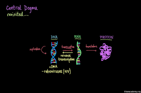 central dogma of molecular biology video khan academy