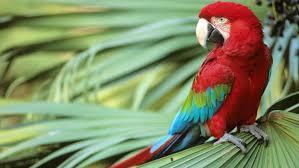 where do parrots live reference com