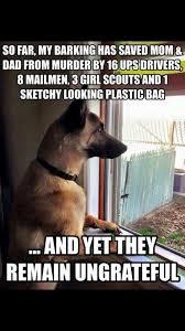 australian shepherd meme the german shepherd funny puppy memes pinterest german