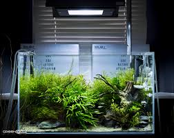Tank Aquascape Planted Tank Aquascape Aquascaping Planted Tanks Aquariums