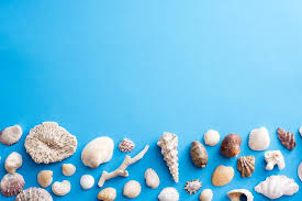 Assorted Seashells Free Image Of Lower Border Of Assorted Seashells