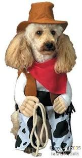 Halloween Costumes Dogs Football Fever Dog Costume Dog Halloween Costume