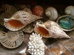 Seashell Centerpiece Ideas by 62 Best Sand Castles U0026 Seashells Images On Pinterest Sea Shells