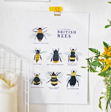 a collection of british bees print