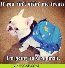 Funny Grandma Memes - funny meme about dog vs grandma 99gap com