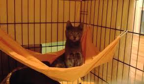 diy cage hammock petdiys com