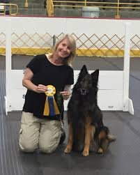 belgian sheepdog national specialty 2014 savvy u2013 k9 rivalry