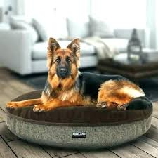 costco pet beds costco dog bed supremegroup co