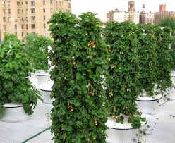 Vertical Aeroponic Garden New York City U0027s Most Successful And Longest Running Hydroponic