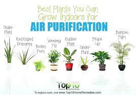 good inside plants good office plants best indoor plants best plants you can grow